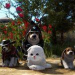 《黑色沙漠》寵物系統大更新!慶祝全球冒險家突破千萬人!